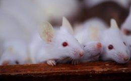 マウスを使った画面表示機能